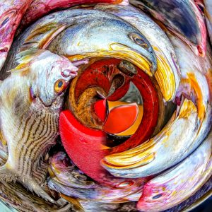 Fish in a bowl by Juan Murcia